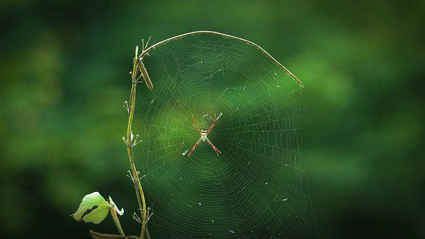 Kerala, India, Spider, Wild, Nature, Wood, Colorful