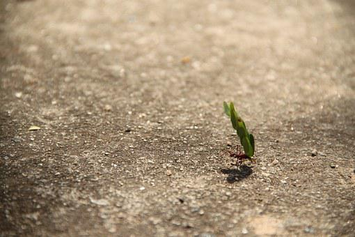 Work, Ant, Weight, Leaf, Strength, Effort