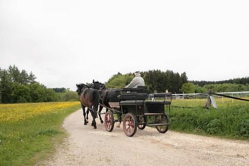 Coach, Horse Drawn Carriage, Team, Horses, Spokes, Old