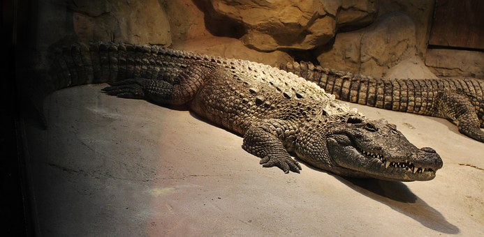 Armor, Crocodile, Leather Shoes