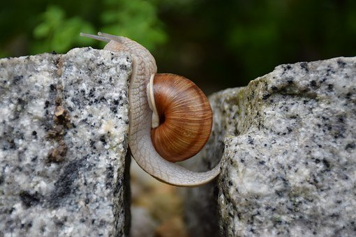 Snail, Obstacle Overcoming, Will, Managed, Courageous