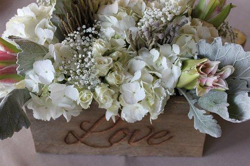 Flowers, Rose, Valentine, Romance, White, Petals