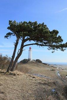 Lighthouse, Hiddensee, Thornbush