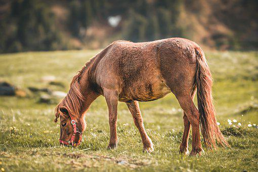 Horse, Animal, Nature, Ride, Pasture, Landscape, Brown