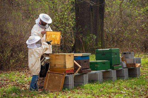 Beekeeper, Bees, Young, Hive, Honey Bee, Bee Keeping