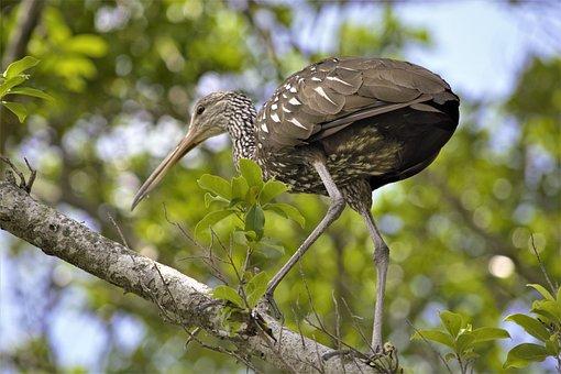 Bird, Tropical, In Tree, Long Legs, Long Beak, Tall