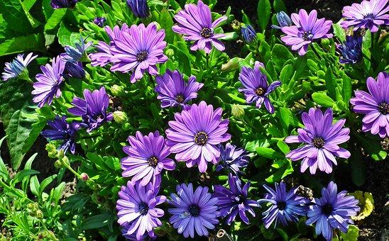 Flowers, Nature, Summer, Garden, Closeup, The Petals