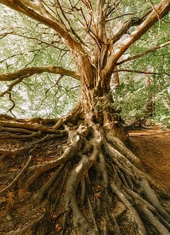 Root, Tree, Old, Nature, Forest, Jungle, Force, Leaves