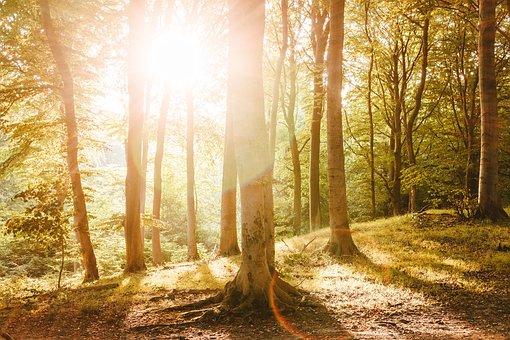Beech Wood, Rügen, Island, Forest, Nature
