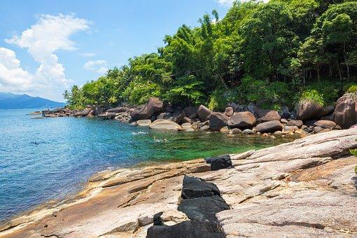 Mar, Jungle, Forest, Atlantic Forest, Rock, Stones