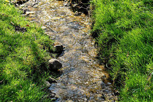Bach, Creek, Landscape, Nature, Water, Forest, Scenic