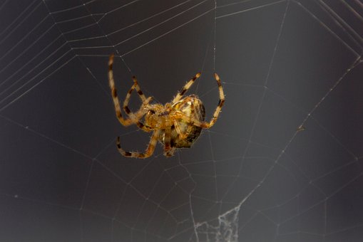 Spider, Animal, Nature, Macro, Close Up, Alive, Phobia