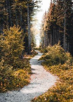 Away, Fog, Hiking, Alpine, Mountains, Mystical, Nature