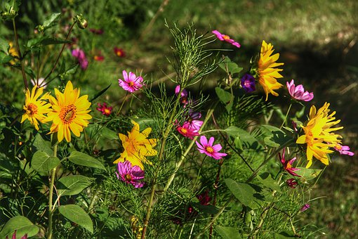 Flora, Flowers, Nature, Background