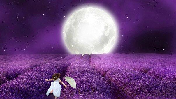 Fantasy, Moon, Bill, Girl, Lavender Field, Nature, Star
