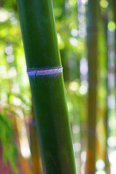 Bamboo, Plant, Nature, Green, Garden, Forest, Asia