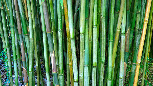 Bamboo, Rods, Bamboo Rods, Bamboo Cane