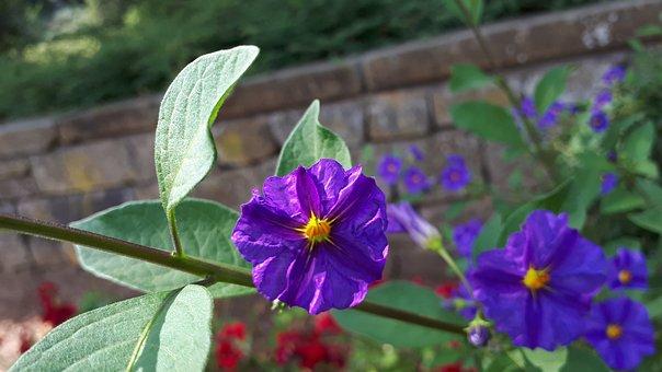 Flowers, Nature, Garden, Summer, Blossom, Bloom, Spring