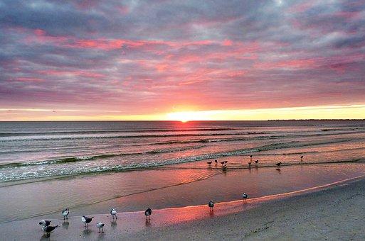 Sea, Birds, Twilight, Orange, Waterpolo, Nature