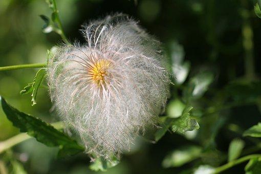 Flower, Nature, Garden, Vaporous