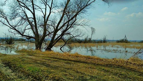 Landscape, Spring, Nature, Spill, Tree, Water, Flood