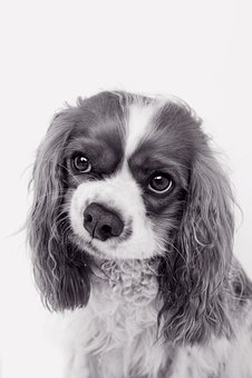 Dog, Animal, Cute, Portrait, Eyes, Adorable, Puppy, Pet