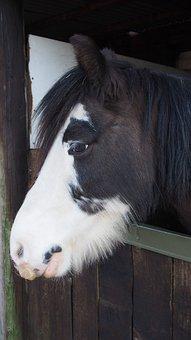Horse, Pony, Head, Nature, Mane, Animal, Horses