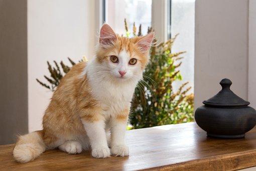 Cat, Cats, Kitten, Kittens, Home, Pet, Animal, Kid