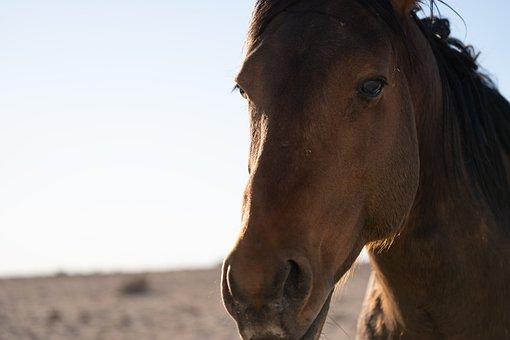 Horse, Head, Animal, Equestrian, Brown, Animal World