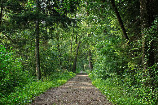 Forest Path, Away, Forest, Nature, Path, Trees, Trail