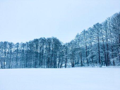Wintry, Winter, Snow, Cold, Snowy, Winter Magic, White