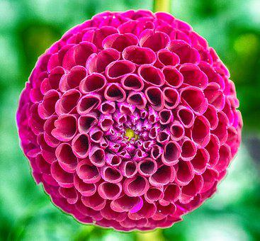 Flower, Bloom, New, Spring, Circle, Decoration, Pattern