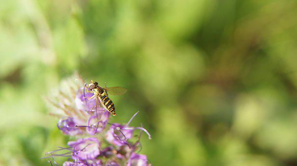 Wasp, Mimicry, Imitation, Fly Bug, Fly, Nature, Garden