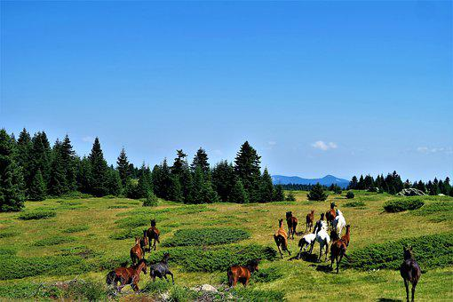 The Horses Are, Nature, Freedom, Animals, Grassland