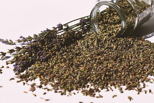 Lavender, English Lavender, Harvest, Seeds, Wallpaper