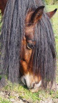 Mane, Hair, Horse, Pony, Animal
