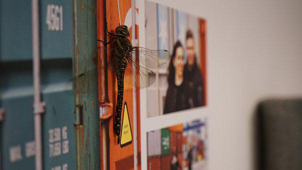 Dragonfly, Huge, Camouflage, Inside, Flight Insect