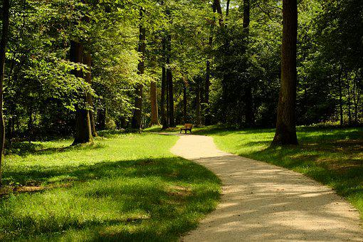 Forest, Away, Nature, Trees, Bridge, Wooden Bridge
