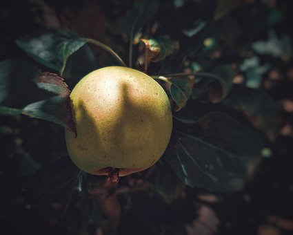 Apple, Fruit, Food, Fresh, Nature, Ripe, Garden, Trees