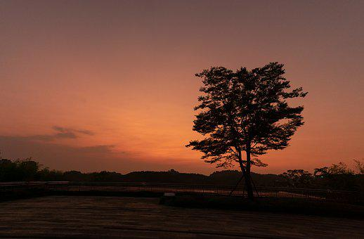 Tree, Silhouette, Sunset, Twilight, Sky, Lonely, Park