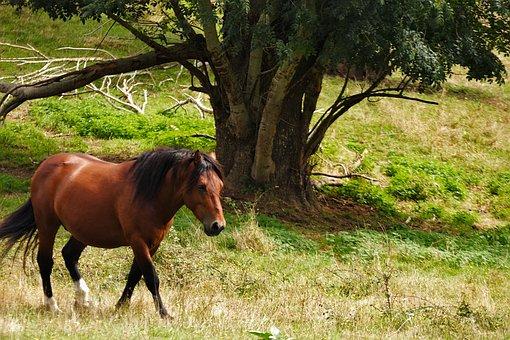 Horse, Pre, Nature, Pastures, Equine, Animal, Mane