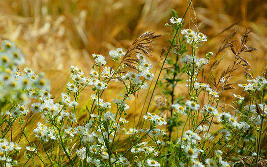 Field, Nature, From, Summer, Village, Meadow, Plants