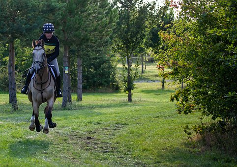 Horse, Galloping, Gallop, Uk Eventing, Riding