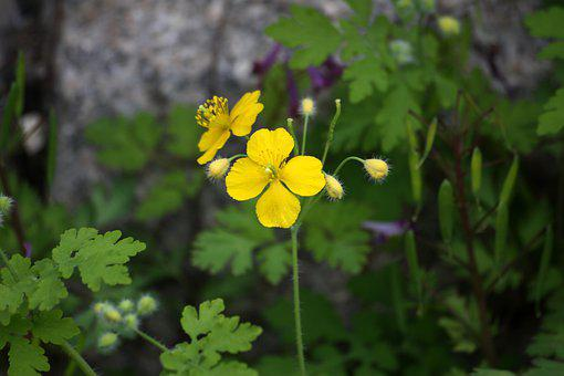 Yellow Flower, Avoid Sprouts, Spring Flowers, Nature