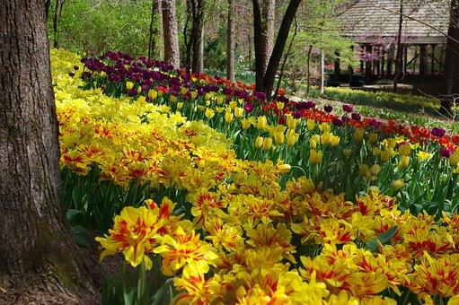 Garvan Woodland Gardens, Flower Garden, Scenic, Spring