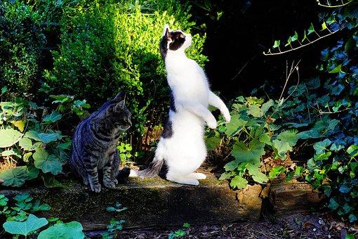 Cat, Standing, Attention, Curious, Cute, Garden, Nature