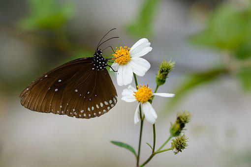 Butterfly, Nature, Animal, Flower, Summer, Wing