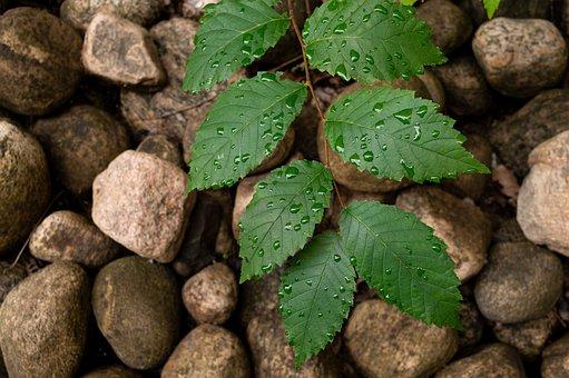 Background, Rocks, Leaves, Leaf, Green, Summer, Rock