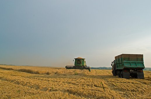 Summer, Harvest, Field, Nature, Bread, Ukraine