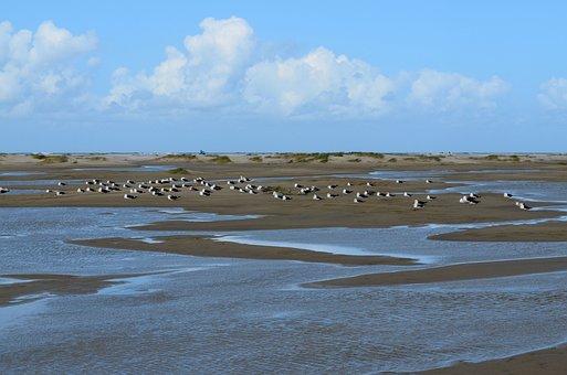 Borkum, Island, Gulls, Wadden Sea, North Sea, Summer